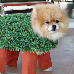 The Chia pet