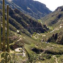 A glimpse into Sabino Canyon