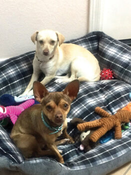 Bambi and Binkie in their SB foster home.