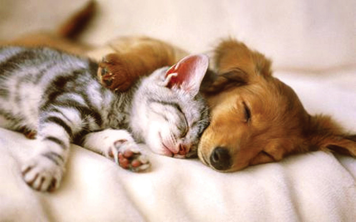 The homeless pets can rest easy knowing that you care.