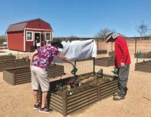 Judy and Bill Henderson planting their garden.